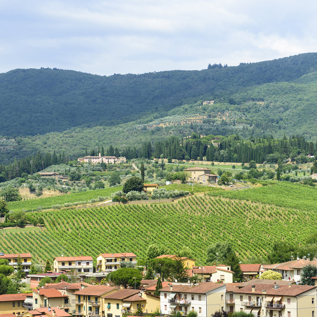 view of vineyards backed by green rolling hills in Greve in Chianti Italy