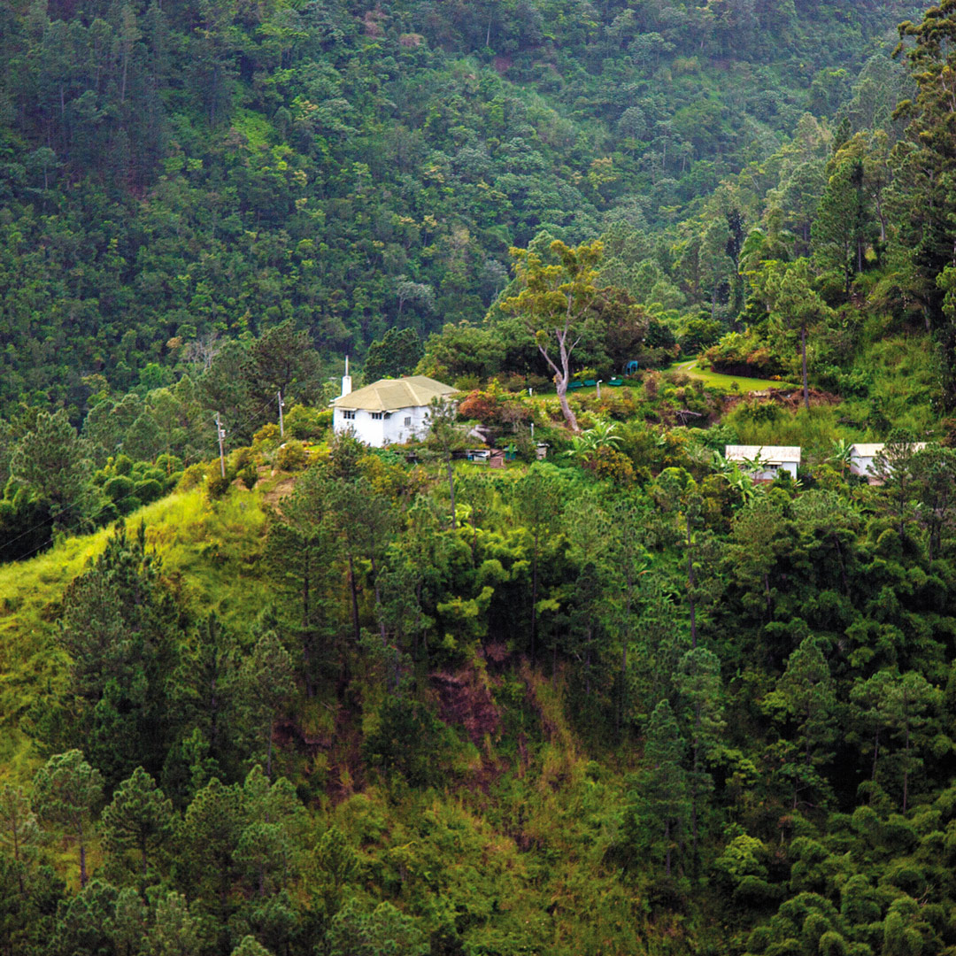 Woodside cabin in the Blue Mountains of Jamaica with access to nature trails in Holywell