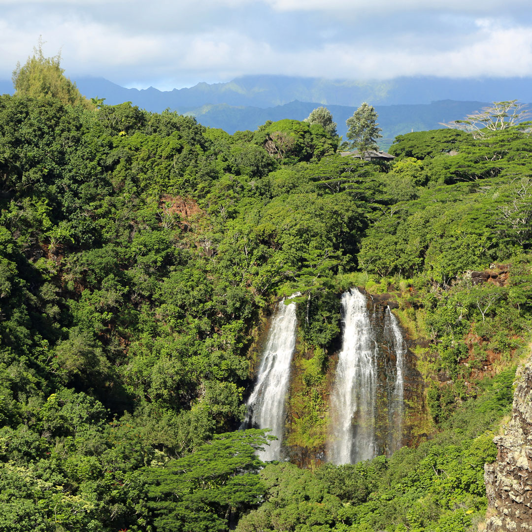 waterfall in dense rainforest in Kauai