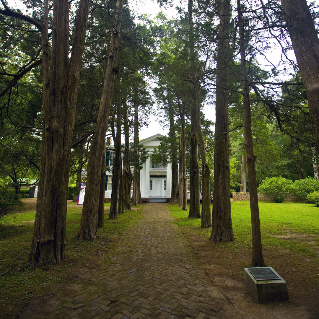oak-lined walkway leading to William Faulkner home in Oxford Mississippi