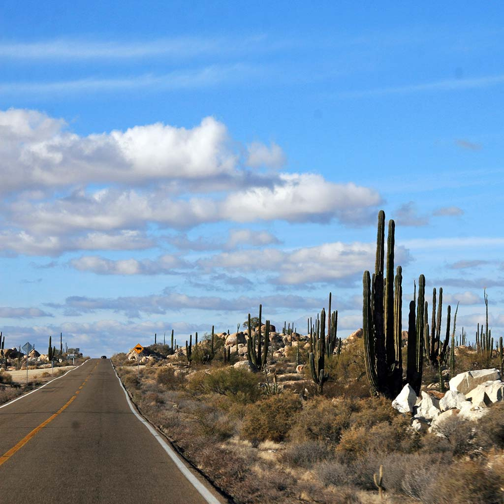 Desert road flanked by cacti in Mexico's Baja Peninsula.