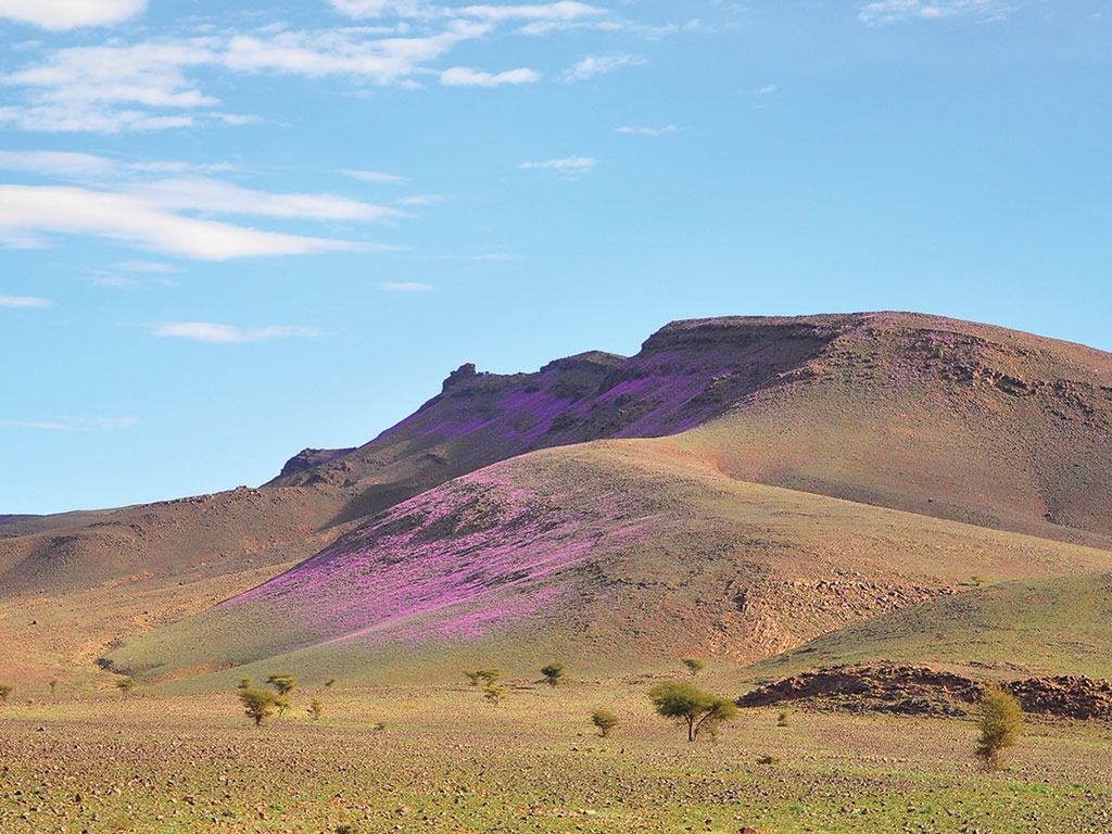 Anti-Atlas mountain range covered in green and purple