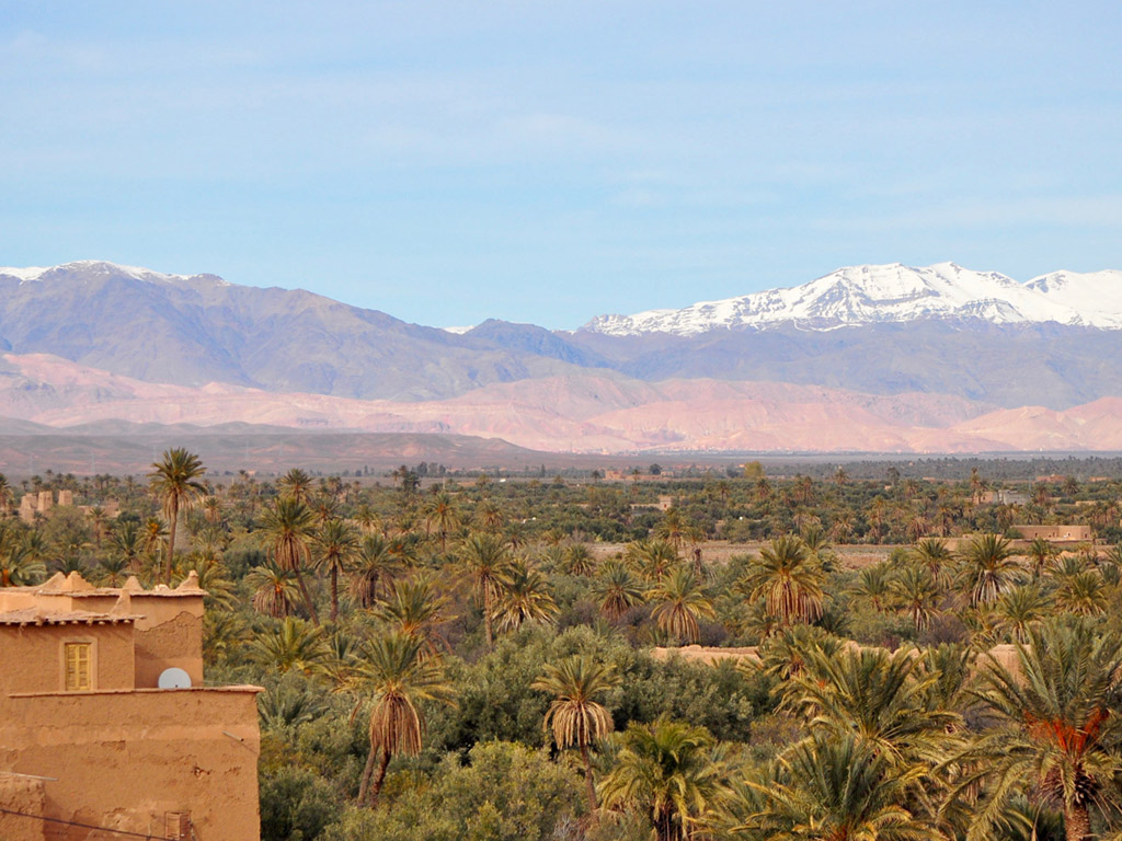 landscape view of palm trees backed by Atlas Mountains in Southern Morocco