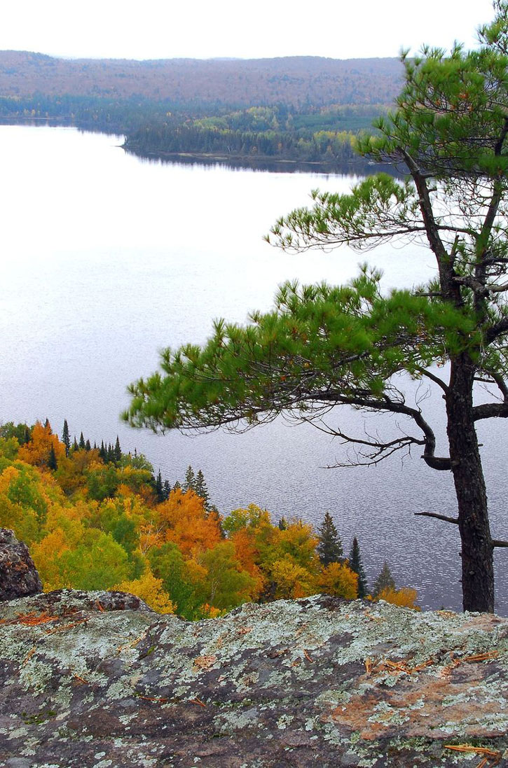 A lone pine at the top of a hill in Ontario's Algonquin provincial park.