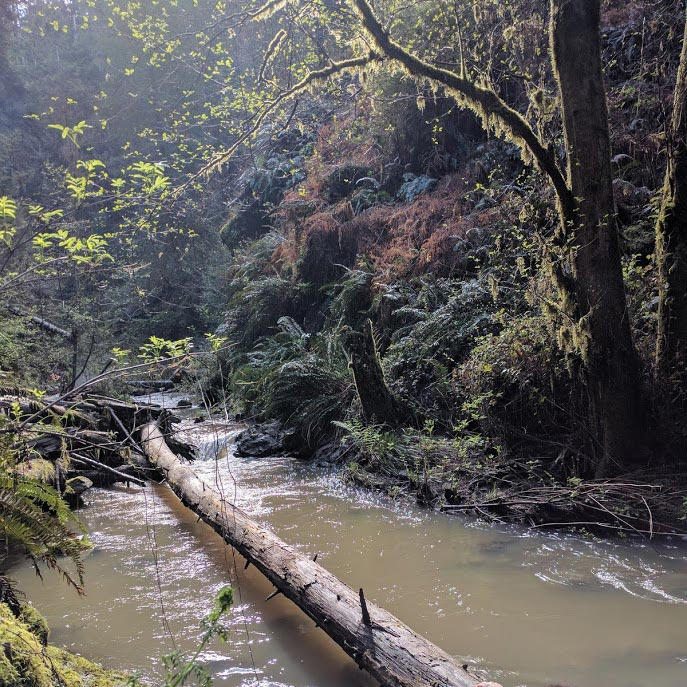 A stream with cloudy water flows over a log, creating a small waterfall. A fallen tree (log) extends outwards, draping itself over the collecting pool below
