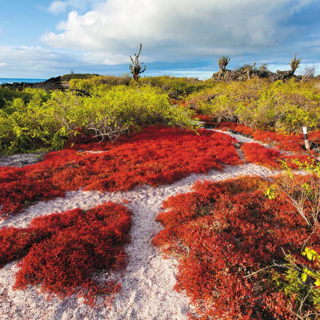 trail through red flora that leads to green flora