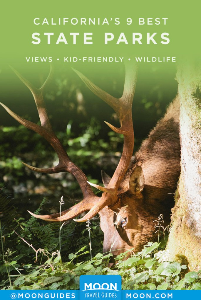 Elk grazing in a shady forest. Pinterest graphic.