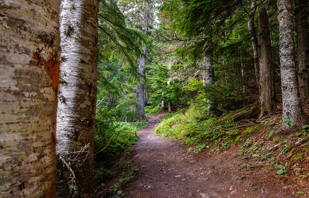 wooded hiking trail in glacier national park