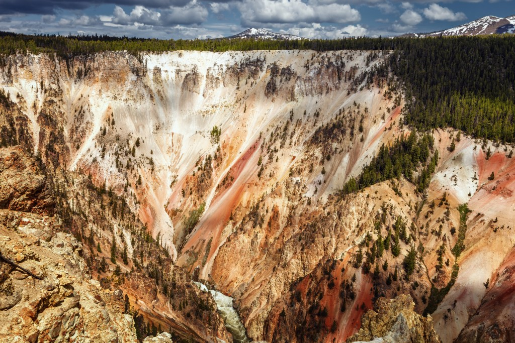 tree-covered earth with colorful striations at grand canyon of the yellowstone