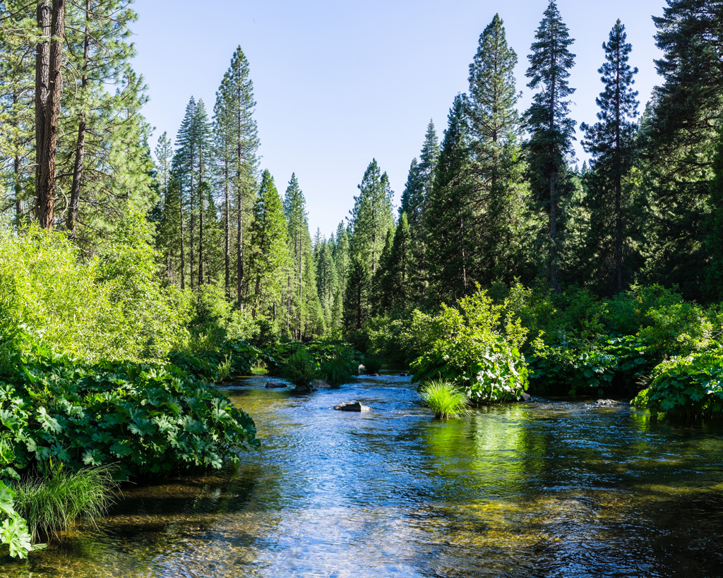 McCloud River flowing through Shasta National Forest, Siskiyou County, Northern California