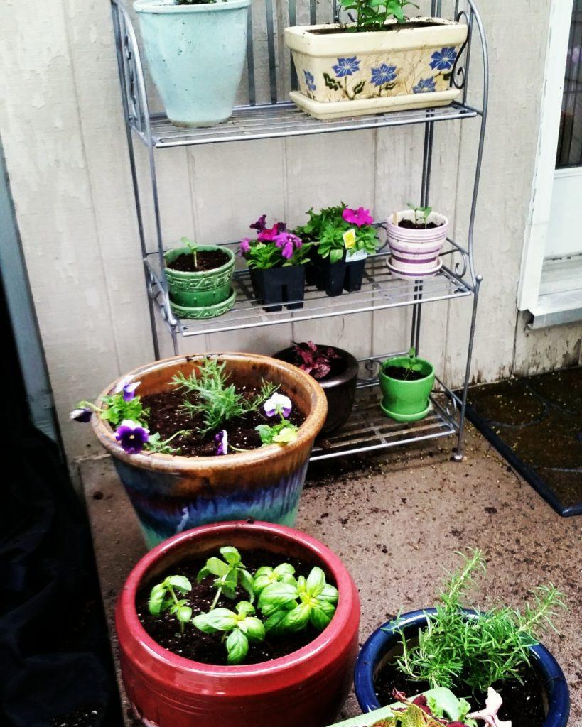 Lower Family Herb Garden
