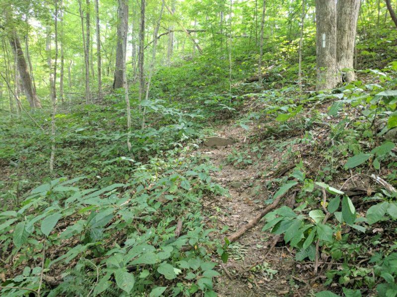 Tecumseh Trail uphill