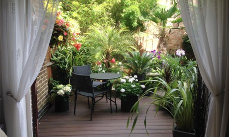 Fresh from starring in Gardeners' world, we have some shots of Mike Spezzano's 'exotic Dalston oasis'. Photographs: Mike Spezzano