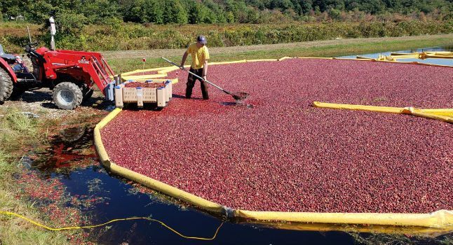Killingworth's Cranberry Bog: A Tale of Two Families