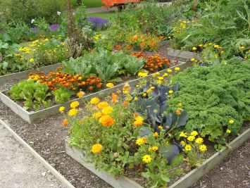 Plantes compagnes, permaculture, plant bio, st renan, brest, hadenn