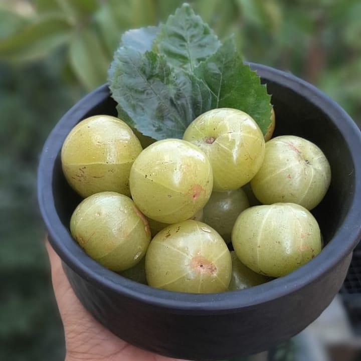 Amla Fruit for Hair Benefits