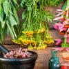 12 de Abril de 2019 – Medicina herbal para la atención primaria en el mostrador de la farmacia