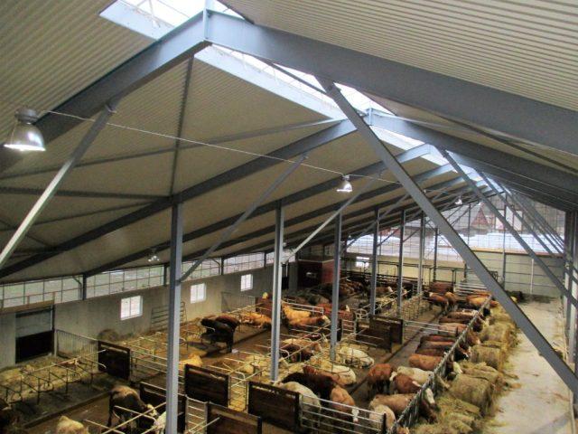 Liggbåsladugård, för ekologisk kött produktion