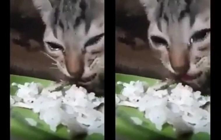 Mengharukan, anak kucing ini sampai menangis saat diberi makan dalam kondisi kelaparan