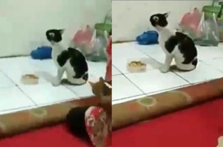 Lama nggak pulang, kucing ini 'baper' ketika dapati majikannya punya hewan peliharaan lain