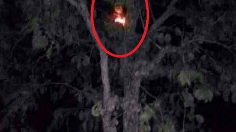 Video viral! Penampakan hantu kuyang hebohkan warga Balikpapan