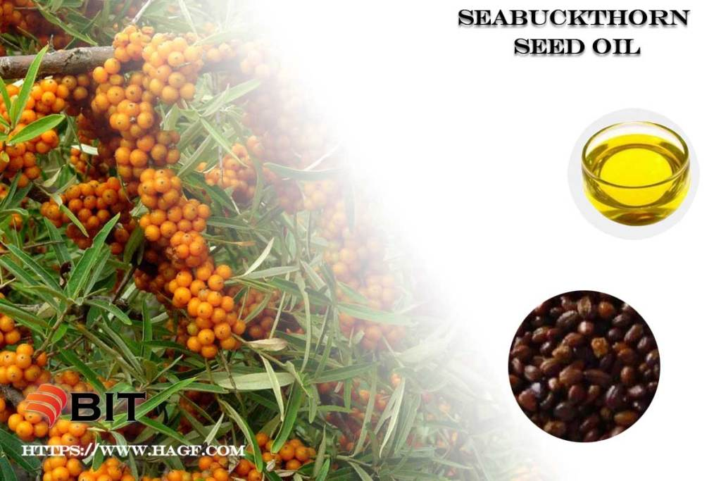Supercritical CO2 Extraction-of Seabuckthorn Seed Oil