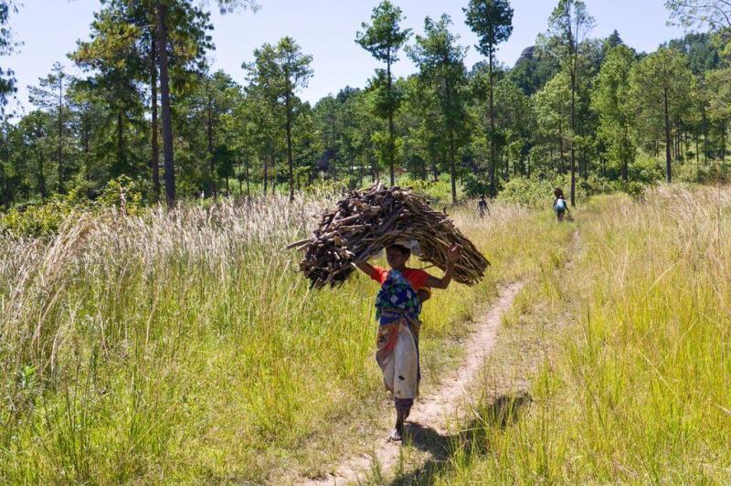 kenyan firewood
