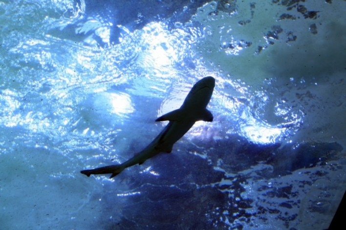 SharkAquarium