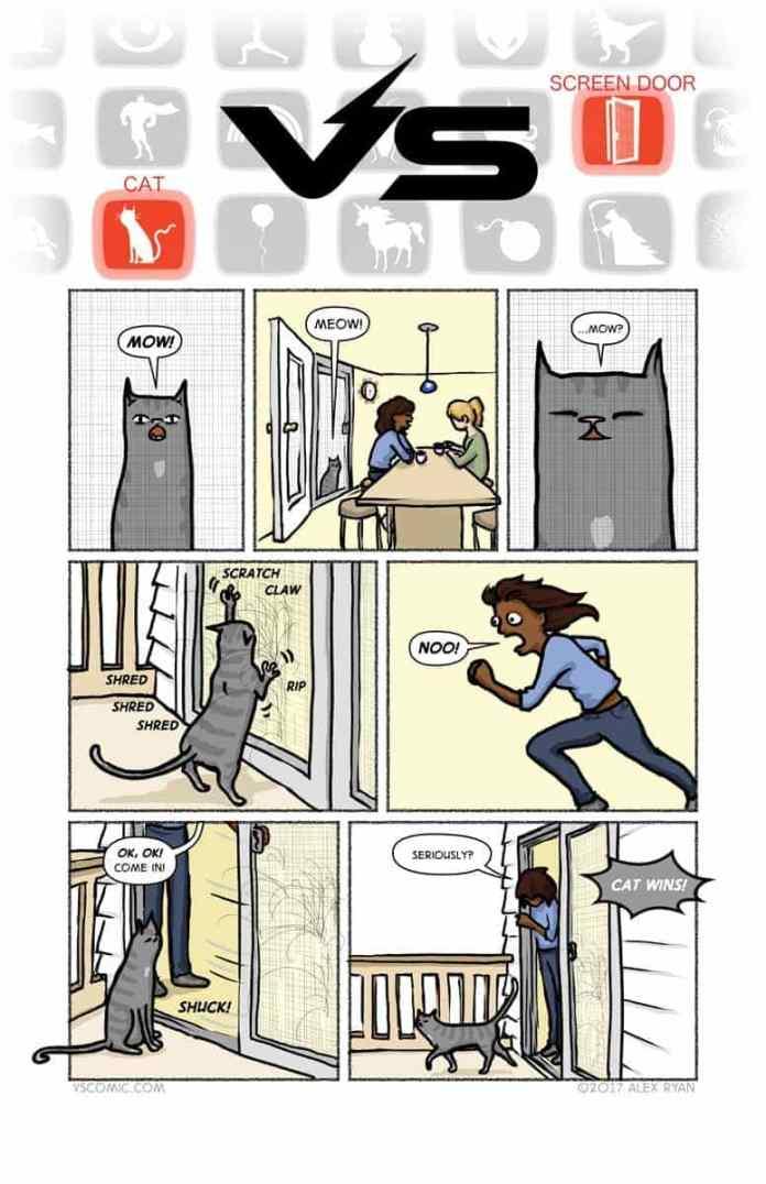Battle between Cat versus Woman