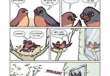Spring bird warrior till the end