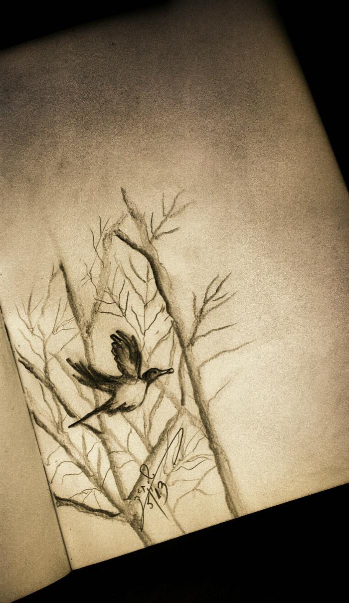 bird_pencil_drawing