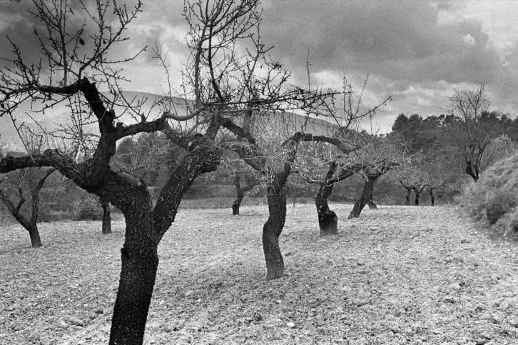 Haikai Photo fotógrafo de eventos portugal lisboa