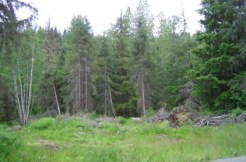 12+ acres with Mosquito Lake Rd Frontage