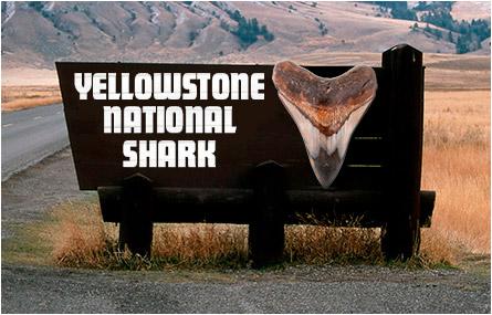 Yellowstone National Shark