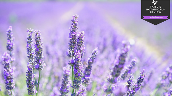 taitu's botanicals lavender herbal body care review