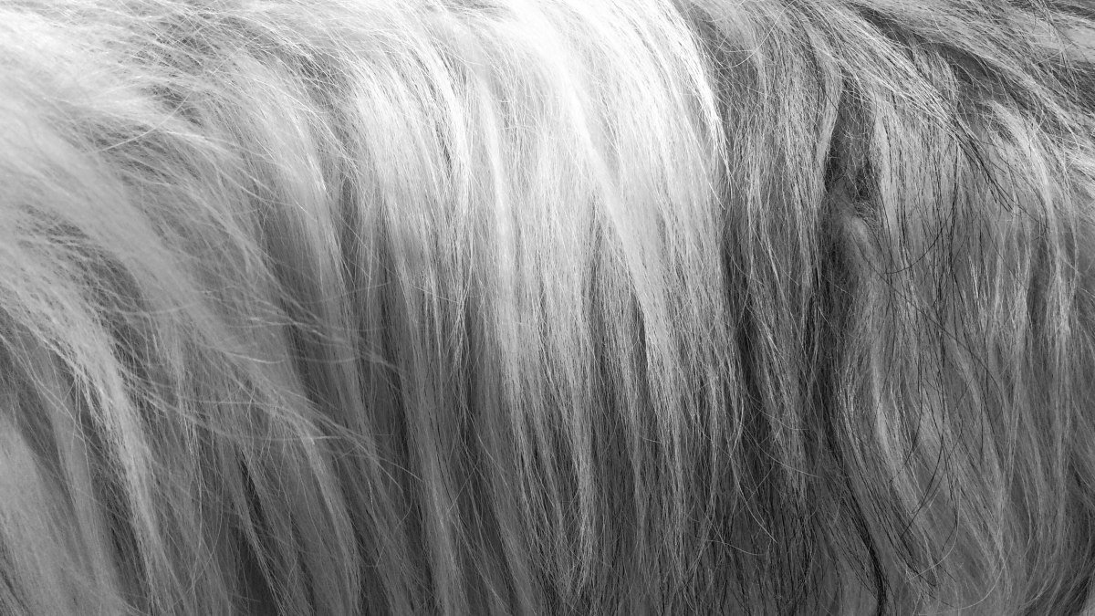 The Different Shades Of Grey Hair