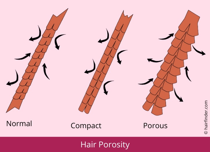 hair porosity diagram