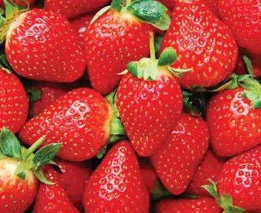 Benefits of Strawberries for Rabbits