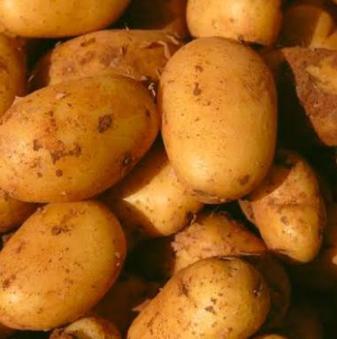 Cosima Potato