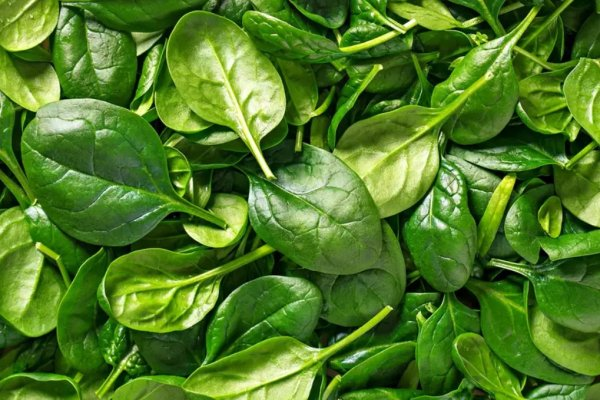 How to Harvest and Store Spinach
