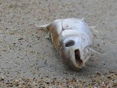 Haïti - Environnement : Le Gouvernement interdit de consommer le poisson du lac Azuéi