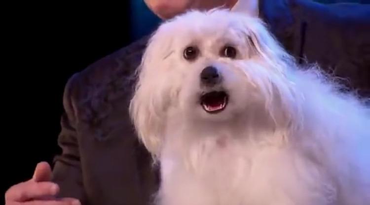 بالفيديو : شاهد الكلب الذي حير العالم.. يتكلم جميع اللغات..سبحان الله 😱😱
