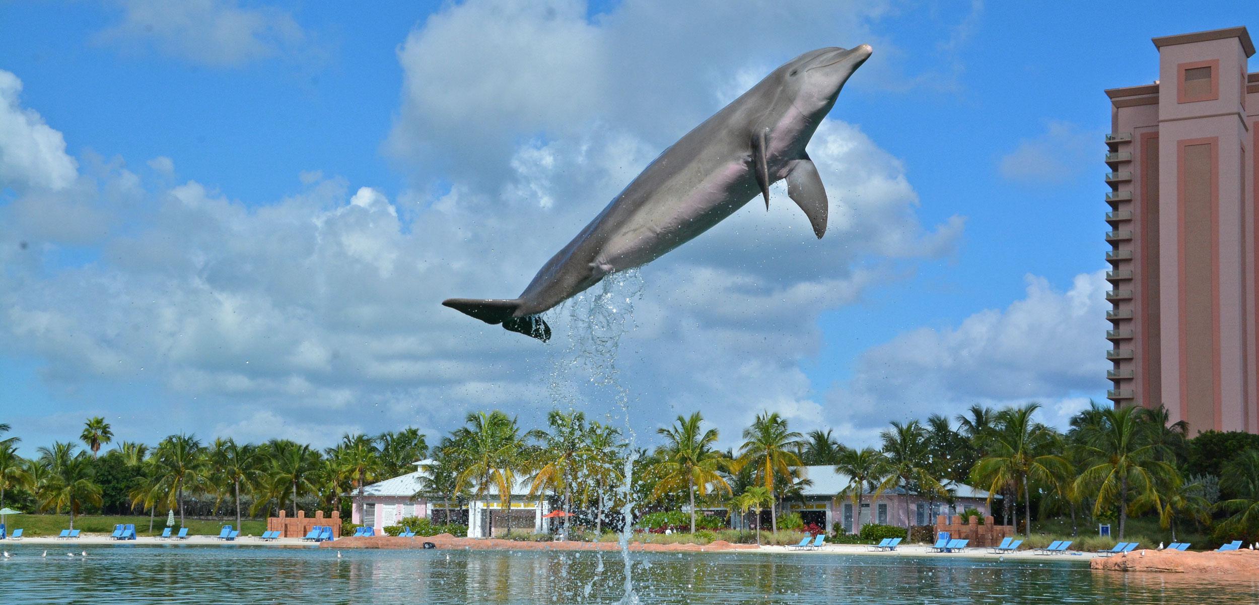 kelly the sassy dolphin