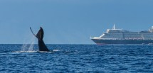 Don T Whales Of Hakai Magazine