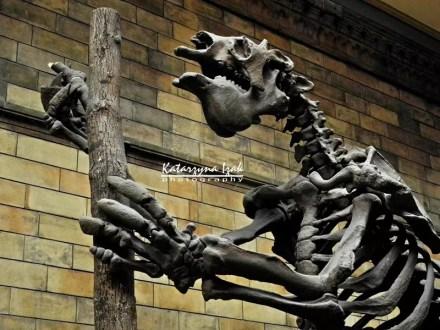 Natural History Museum   Londyn, Wielka Brytania