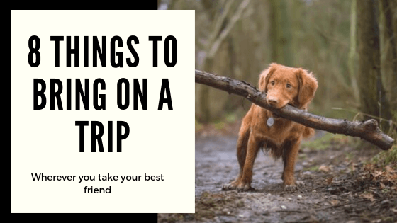 8 Things I Bring On Every Trip