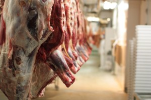 Gurgaon civic body to construct multi-level slaughterhouse
