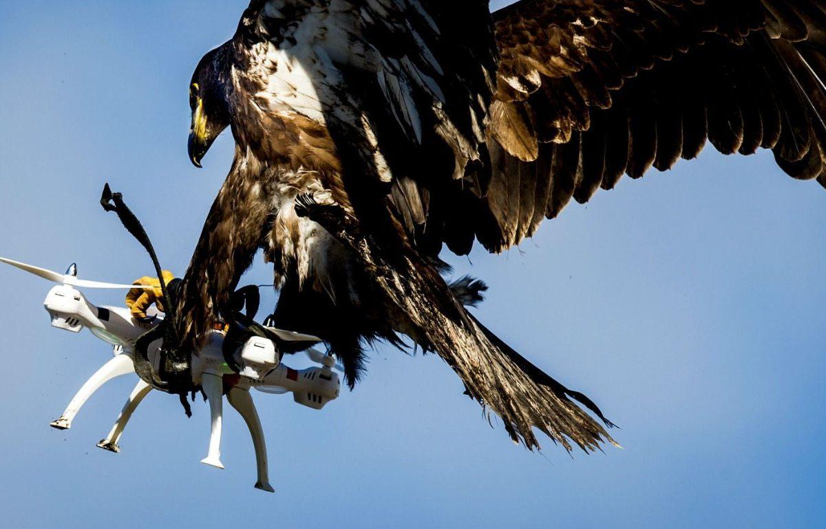 Aguila VS Drone
