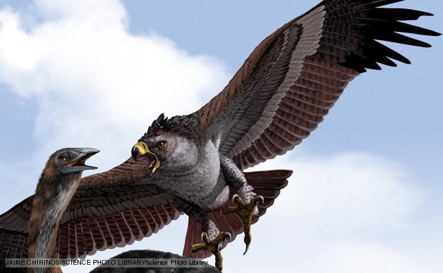 Águila de Haast (Harpagornis moorei)