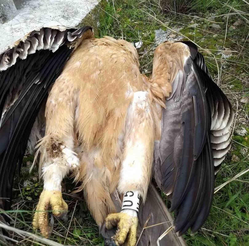 águilas imperiales